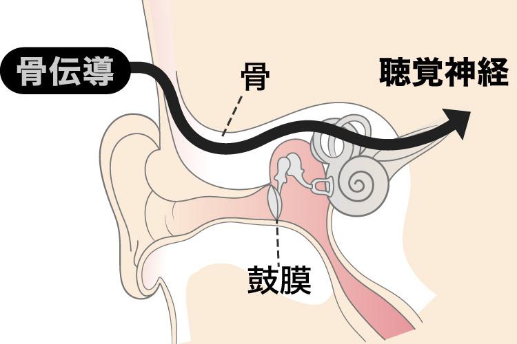 骨伝導は音を鼓膜を使わず直接 聴覚神経へ伝えます。